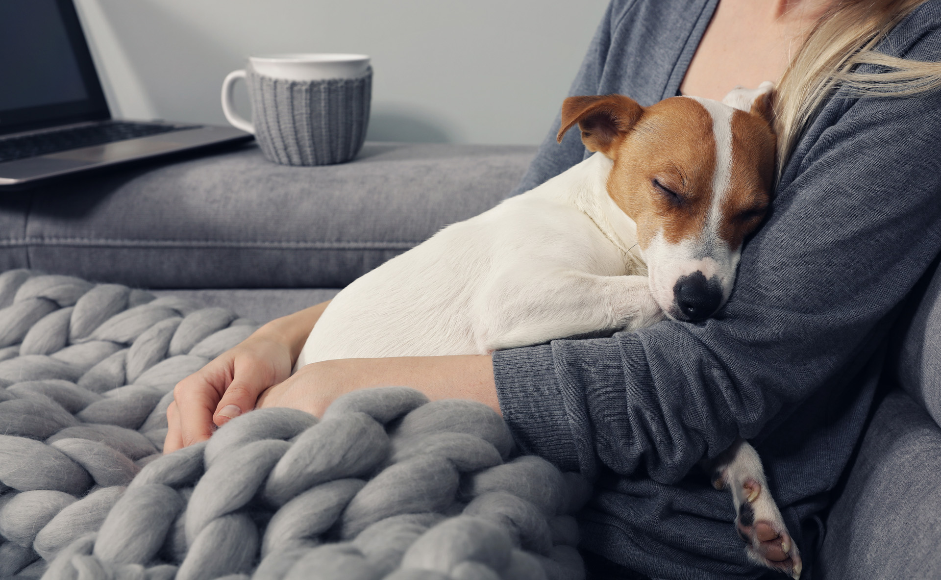 Dog asleep in owner's arms